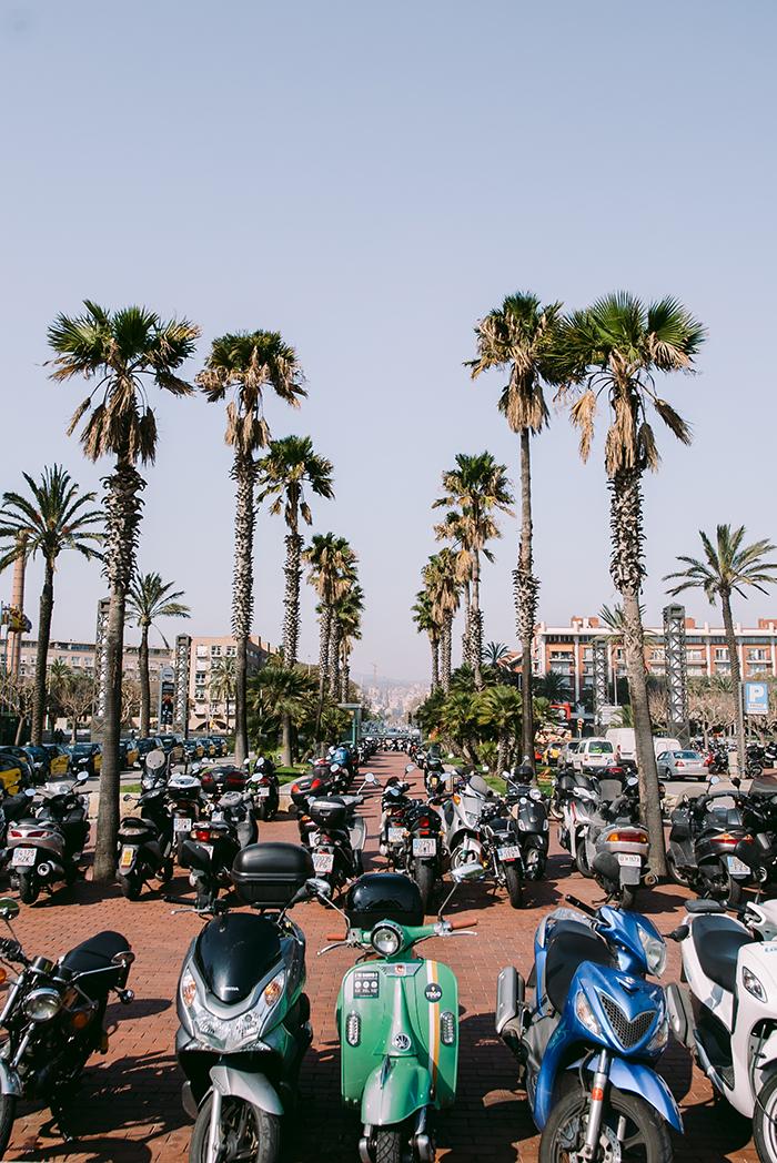Parkende Roller und Palmen in Barcelona.