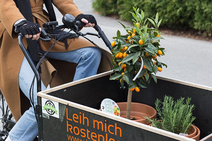Pflanzen in der Box des Lastenrads