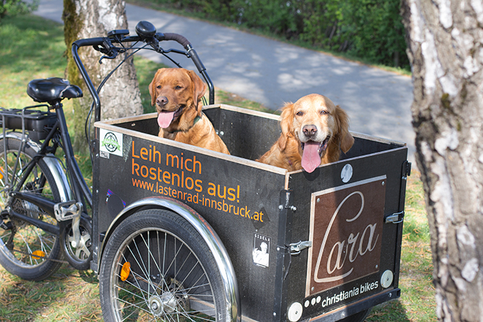 Zwei hechelnde Hunde im Lastenrad