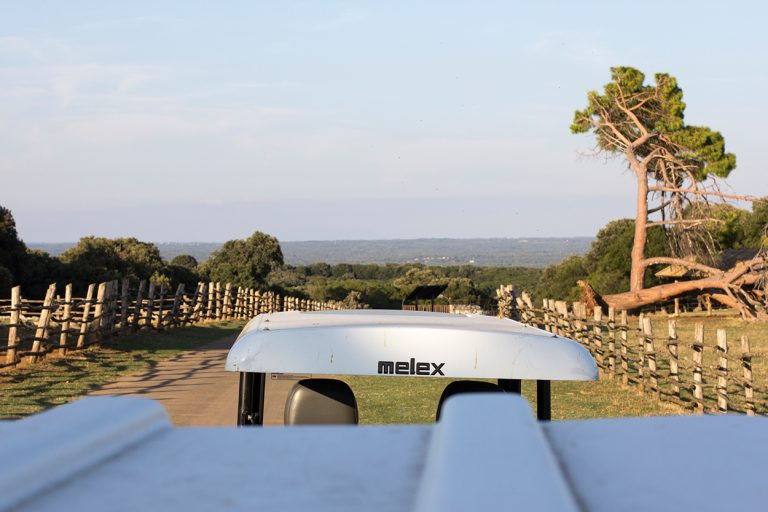 Blick über das Dach des Fahrzeugs in den Brijuni Nationalpark