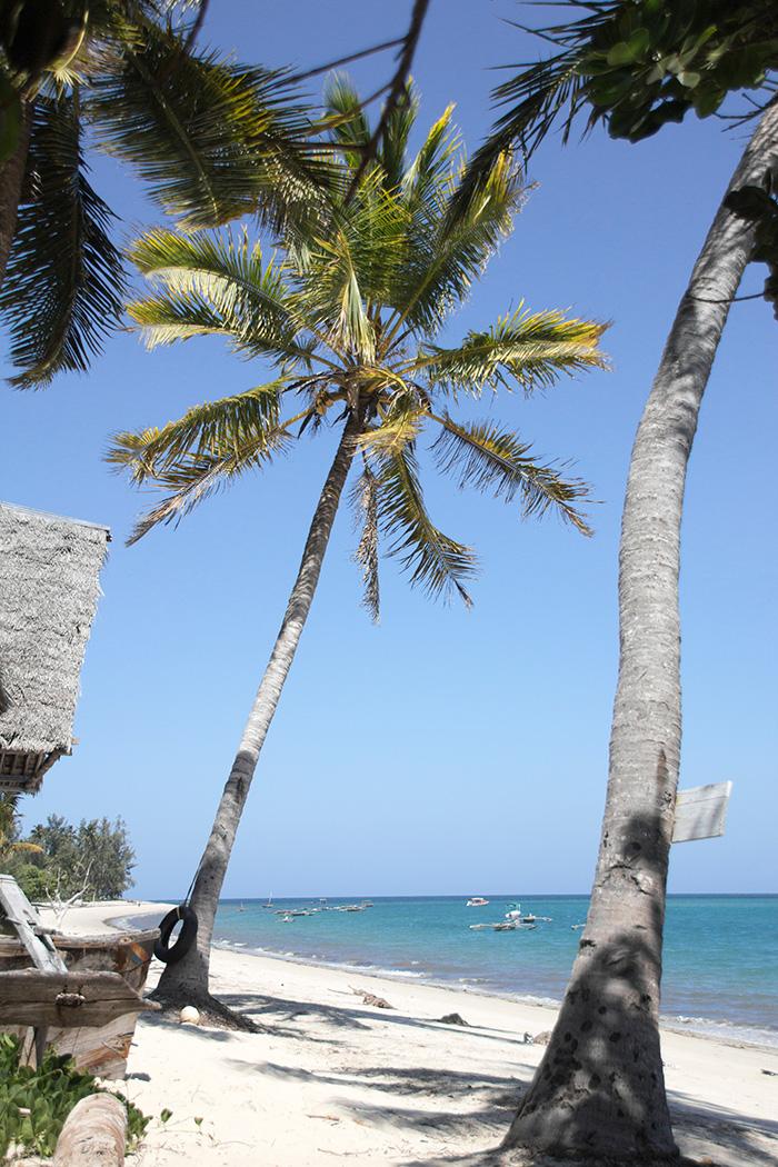 Palmen und weißer Strand