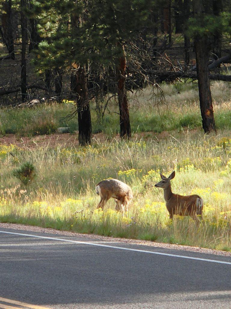 Grasende Wildtiere am Straßenrand